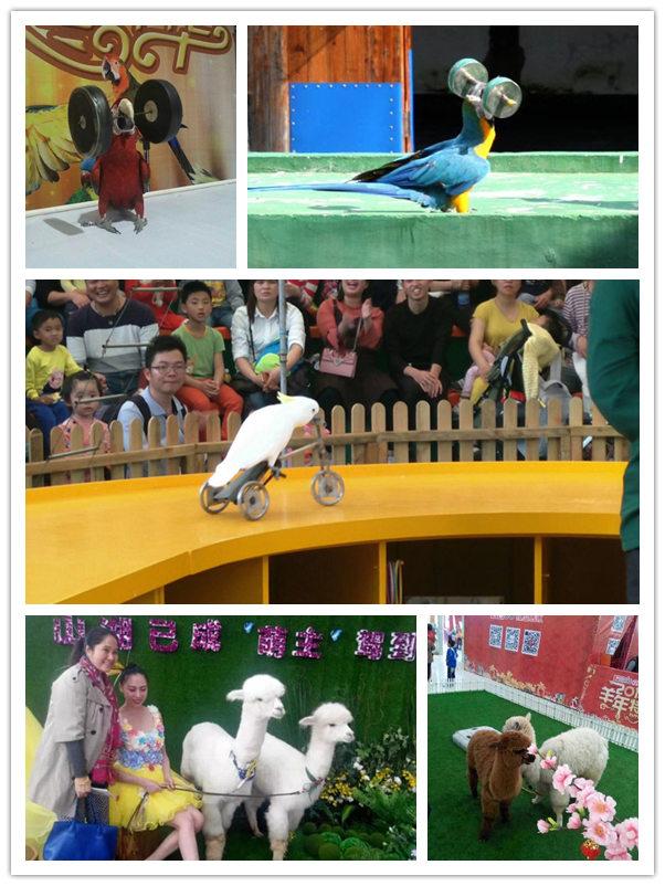 云县海洋动物鱼缸水母展览信誉公司
