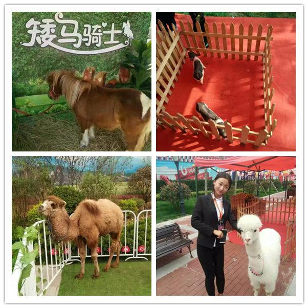 彭泽哪里有出租羊驼展览的信誉公司