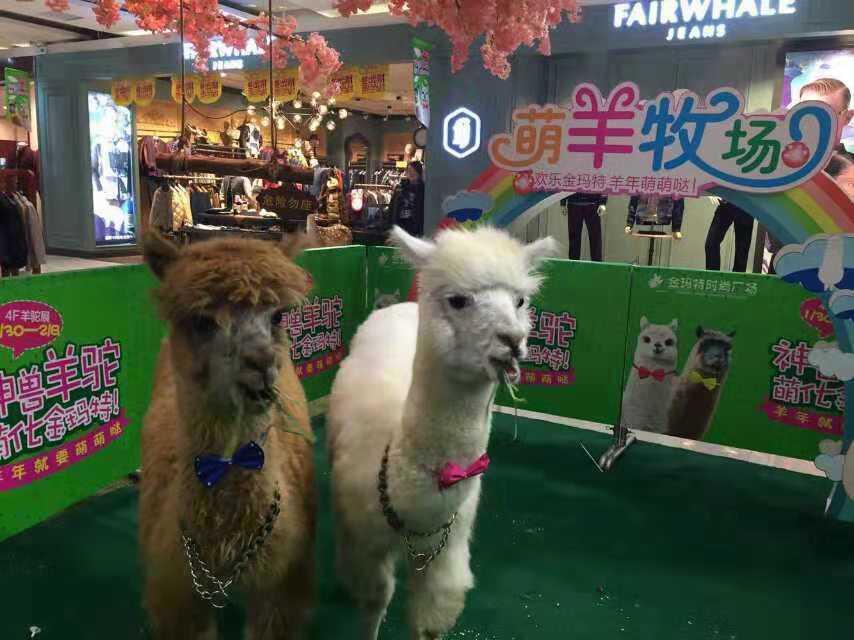 贵州省毕节市本地仿真动物租赁