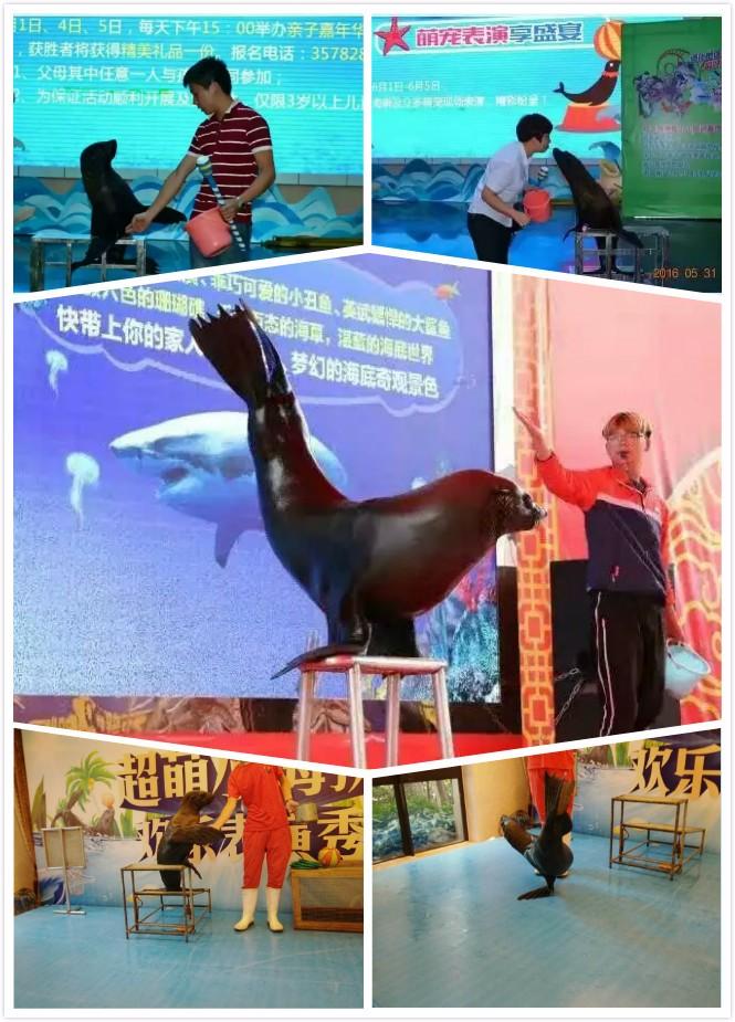 武安市海狮企鹅表演出租租赁亲子互动