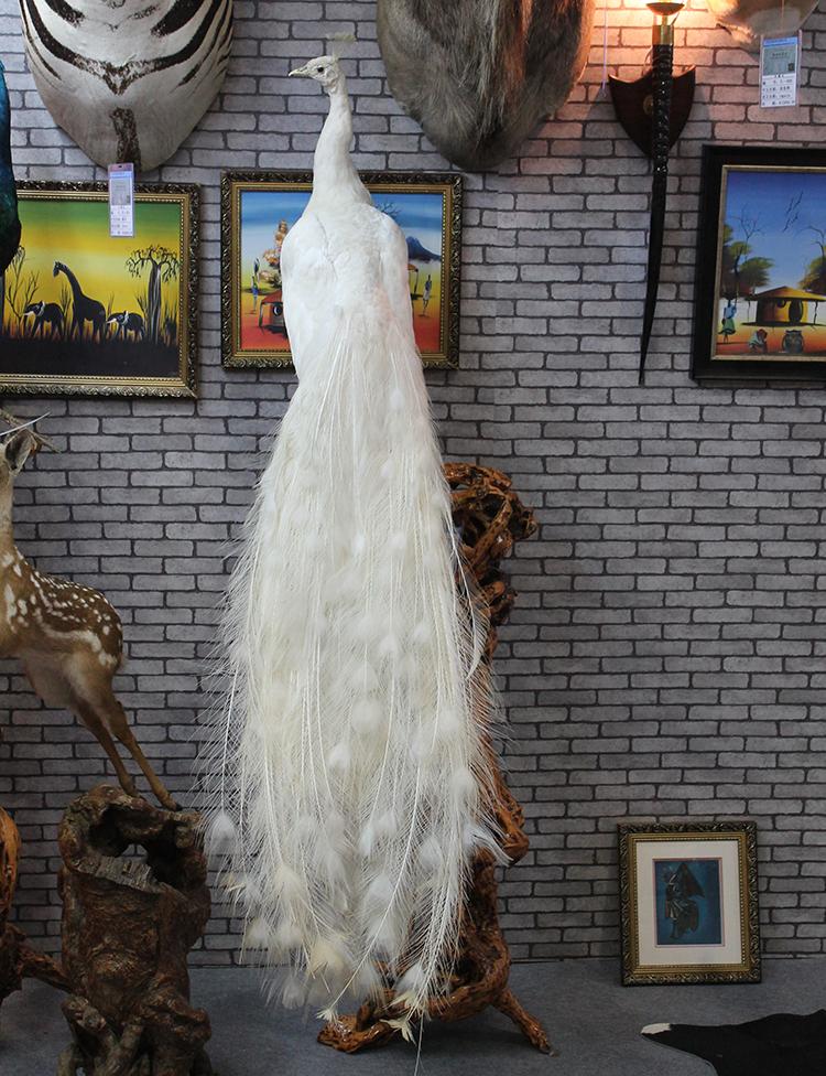 在线咨询:什么地方有卖孔雀标本的全国发货洪金顺养殖