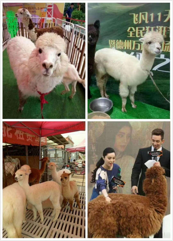 河北沧州马戏团动物杂技表演出租价格
