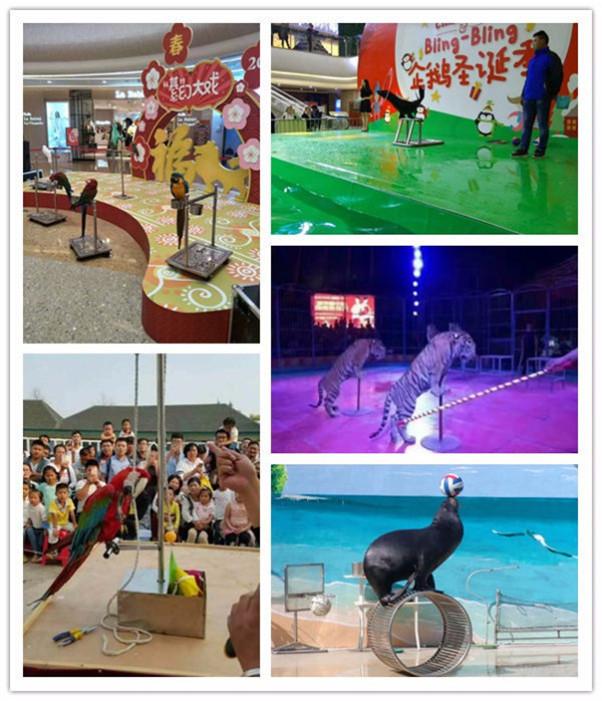 北辰哪里有出租海狮表演的志成租赁公司