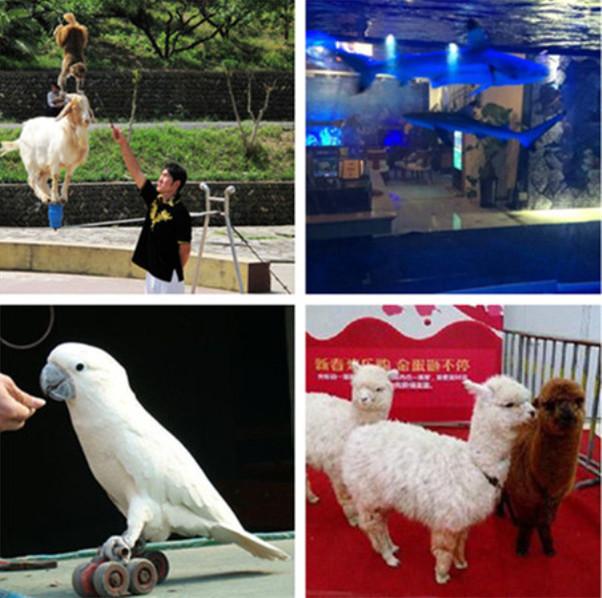 桥头海洋动物表演鱼缸水母展览志成租赁公司