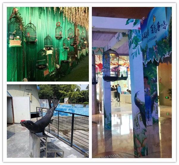 蓟县当地海狮表演价格马戏动物租赁公司