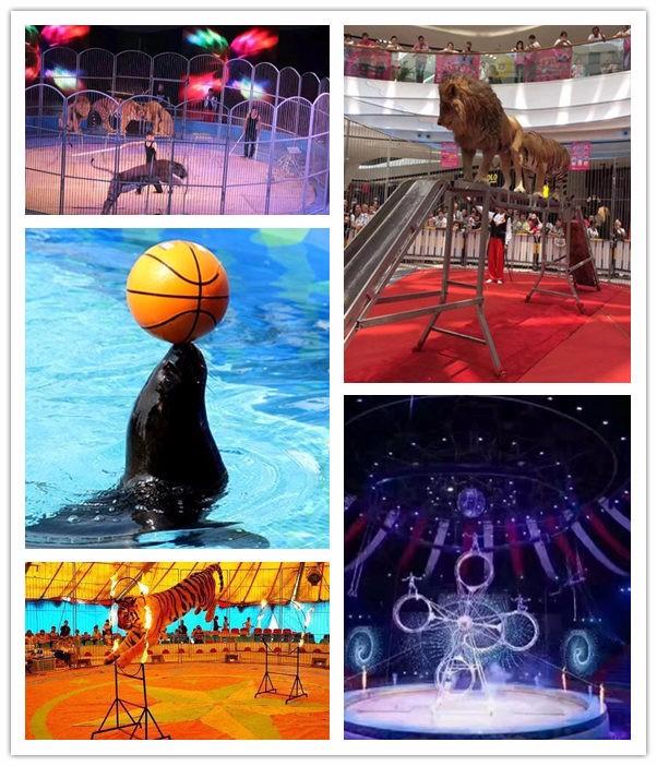 三沙当地小动物表演出租动物暖场活动租赁公司