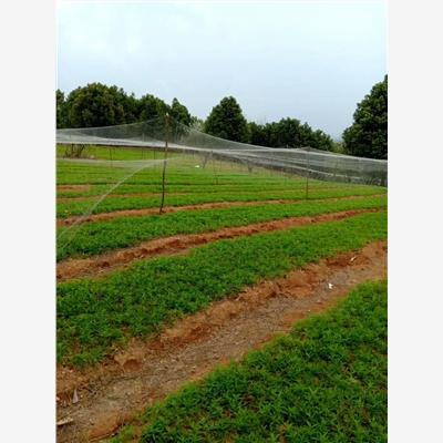 大理市黄油桃和红油桃的区别专业供应商