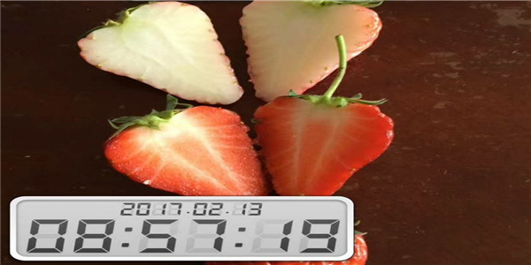 法兰地草莓苗批发价格-浙江温州
