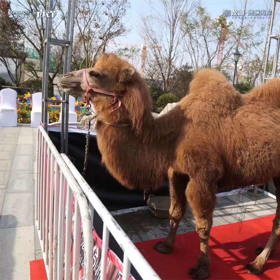 甘南藏族自治州海狮表演出租_优质服务