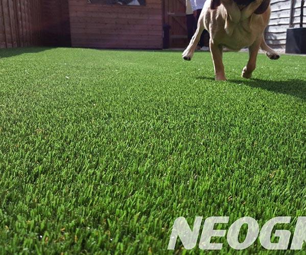 温州龙湾室内足球场人工草坪