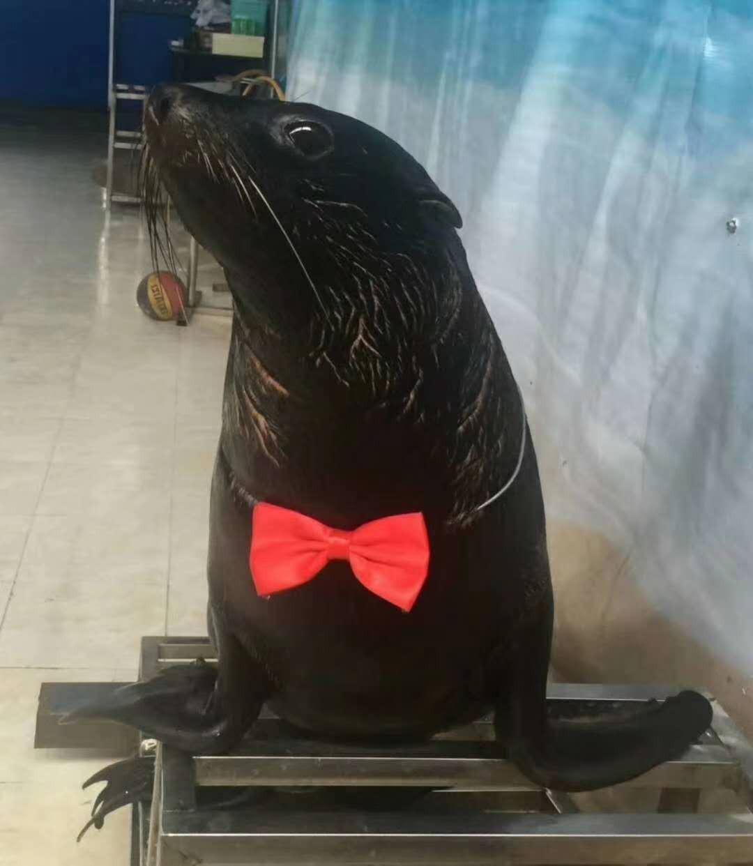 固原市海洋动物租赁_24小时服务