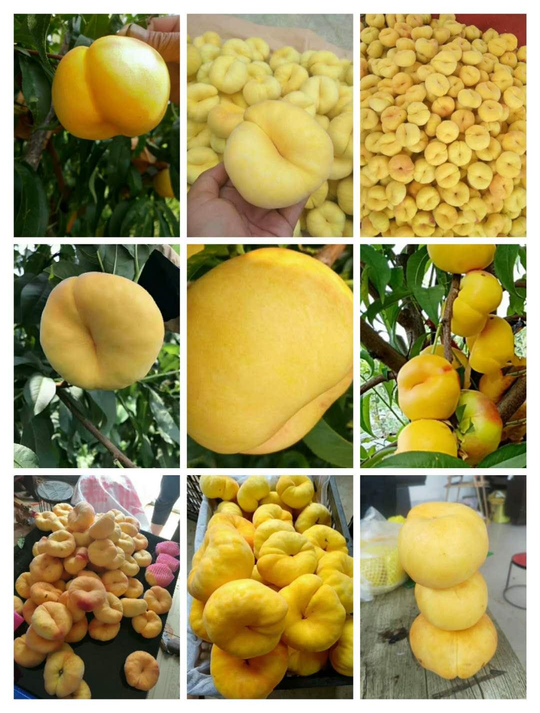 宿松县黄油桃的营养价值专业供应商
