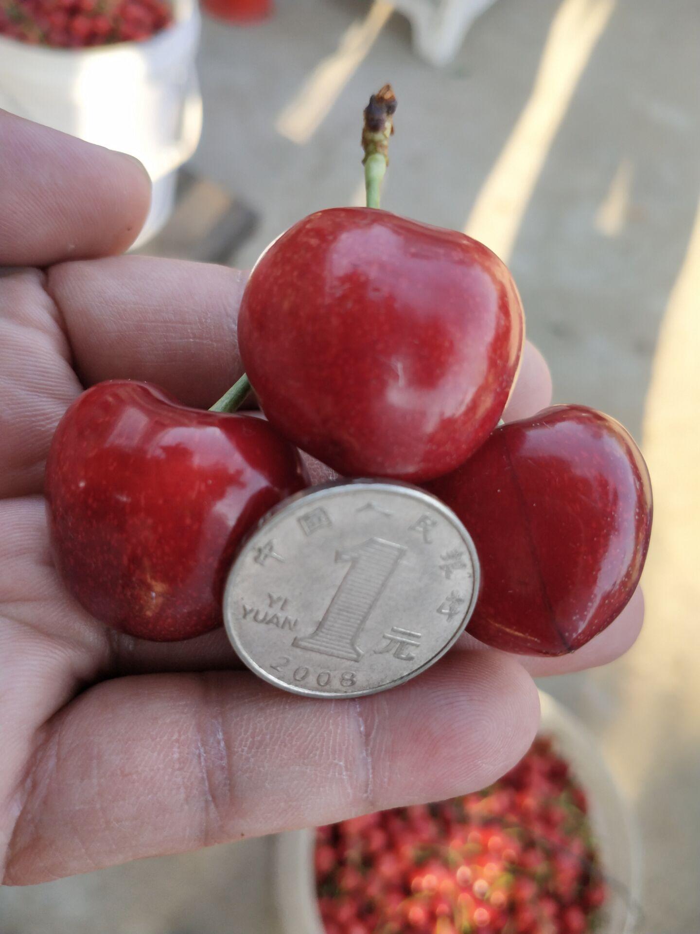 福州奇早大樱桃树规格介绍