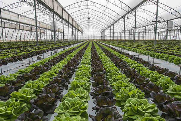 平阳农业智能灌溉系统怎么样