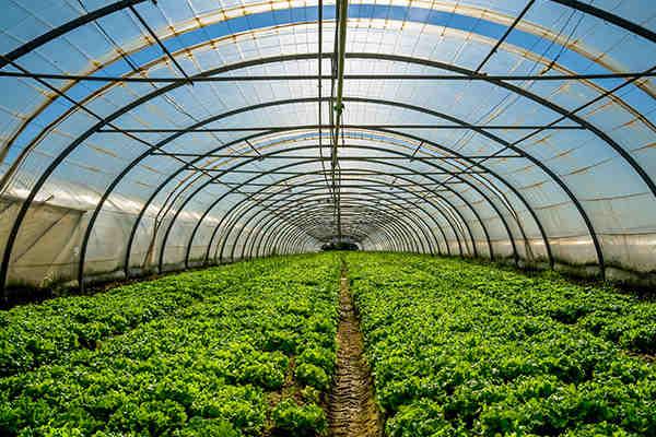 黑河农业大棚环境监控图