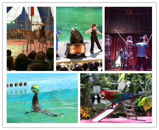 绿园哪里有马戏团表演的信誉公司