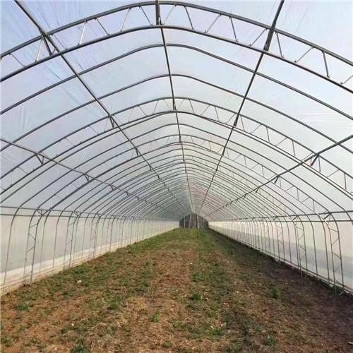 哈尔滨木兰设计温室大棚大有作为