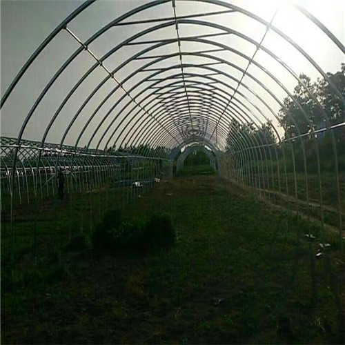 济南济阳养殖大棚厂家设计温室大棚