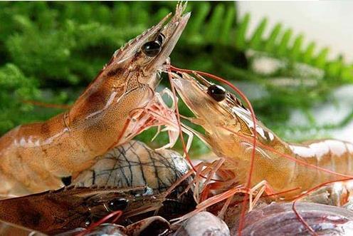临沭对虾可以淡水养殖吗