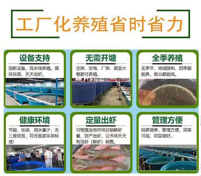 鹤峰南美白对虾养殖基地