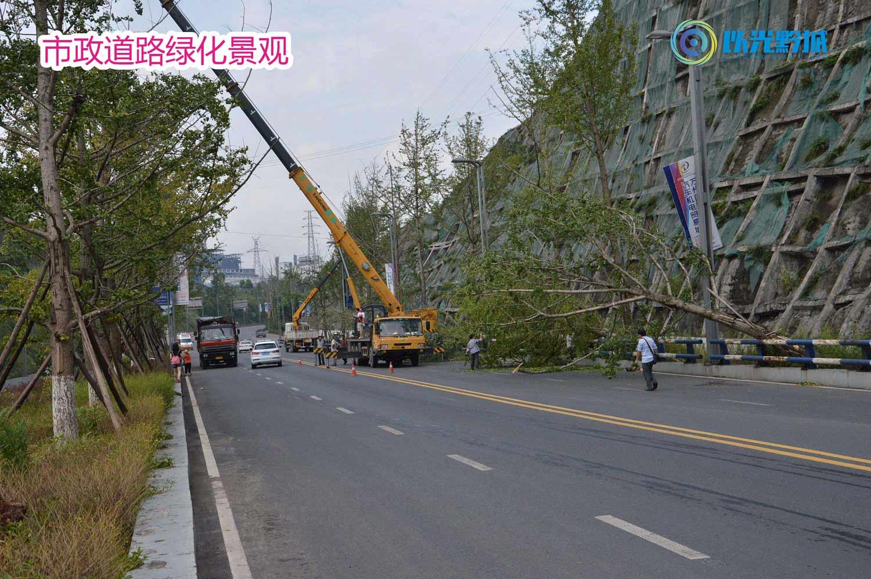 毕节纳雍农村绿化报价企业