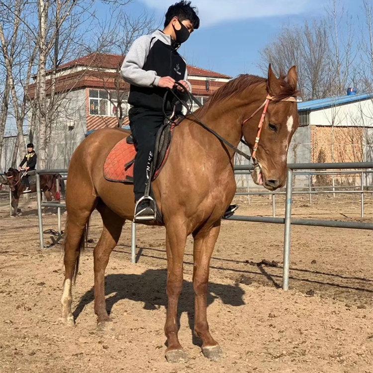 马鞍山小矮马价格,观赏宠物矮马品质保证,正企马业