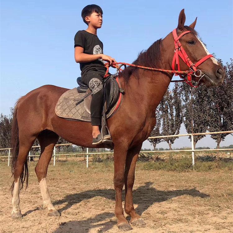 常德进口矮马现货,珍禽矮马附养殖场,正企马业