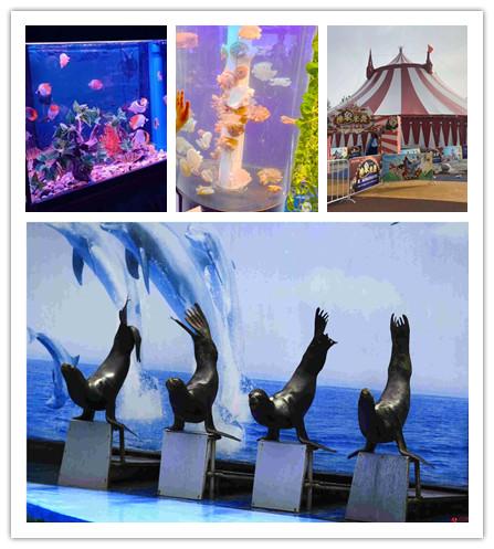 漳州市南靖县鹦鹉表演秀哪里有电话
