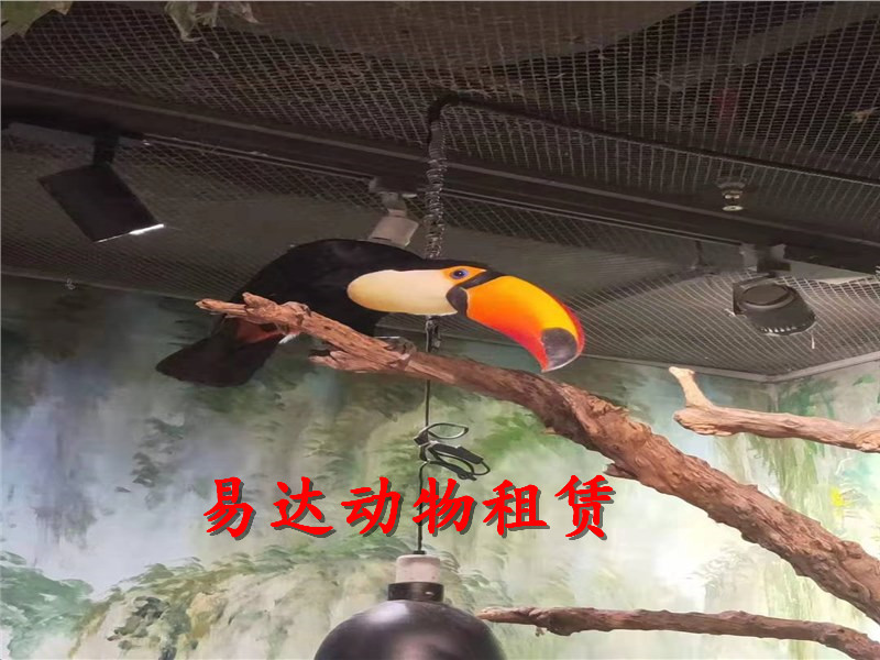凌源企鹅展览出租租赁海狮出租-欢迎来咨询