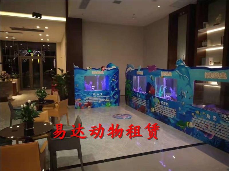 海林水母展览出租租赁马戏团大飞轮表演出租租赁服务热情