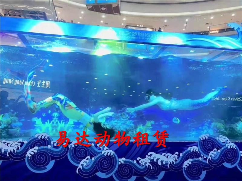 湛江海洋鱼缸展览出租租赁水母出租租赁一手资源
