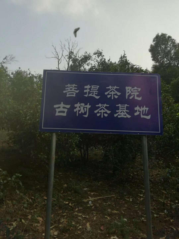 南充顺庆普洱茶代理