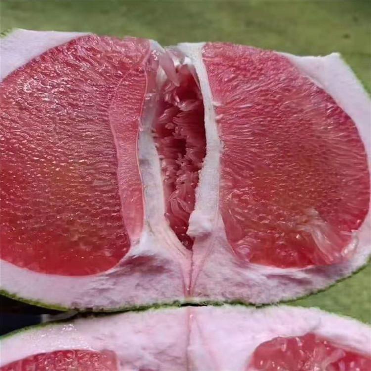 绍兴泰国红宝石树苗正达基地-泰国柚苗枝条售卖