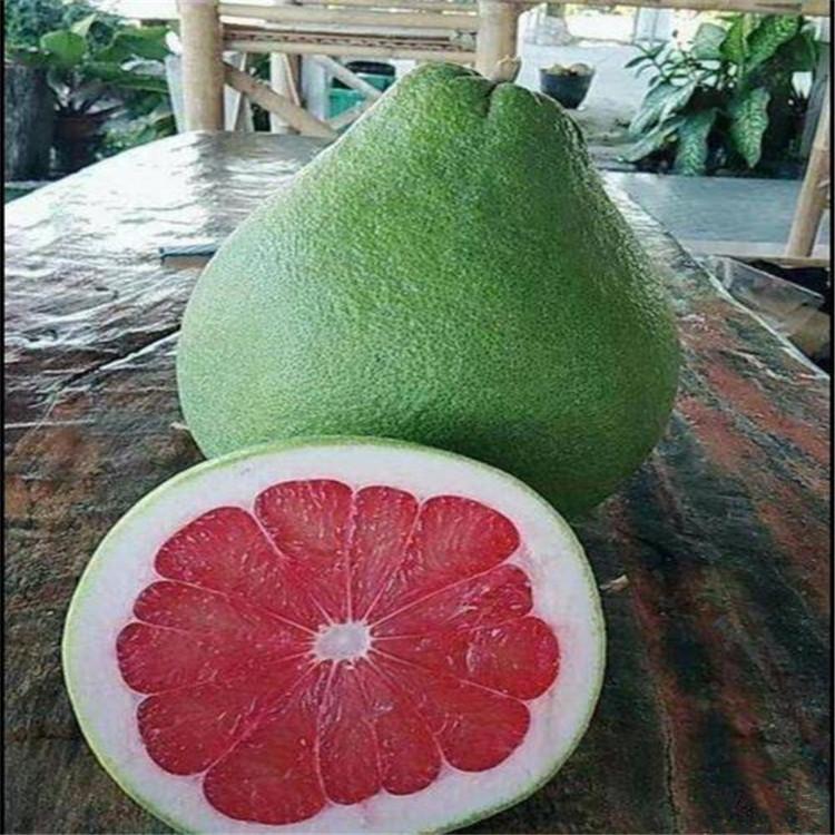 宾川红宝石青柚苗多少一棵-泰国柚苗枝条售卖