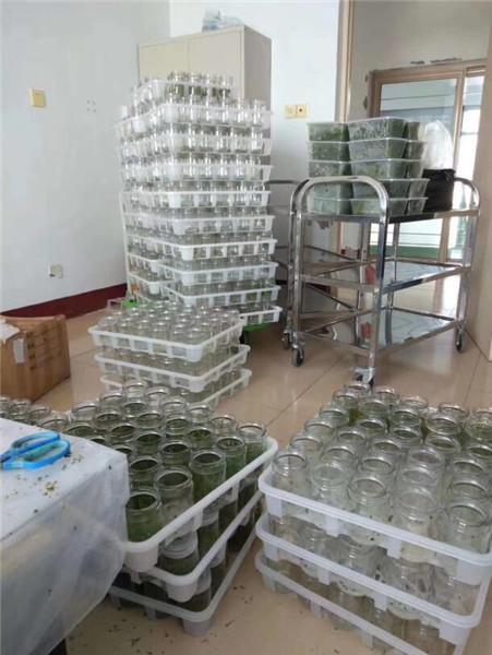 惠州蓝莓苗多久能结果-欢迎咨询